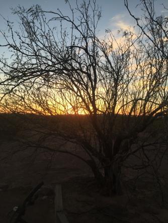 Sunset thru my tree